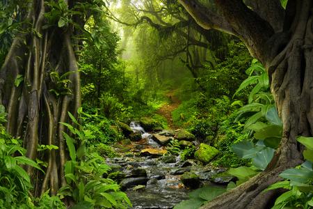 feuillage: jungle tropicale avec rivière