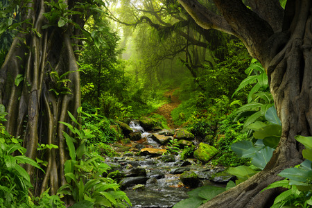 rainy: Tropical jungle with river