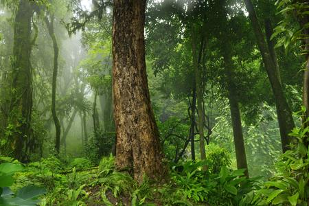 Thailand jungle
