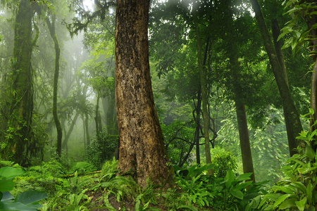 tropical forest: Thailand jungle