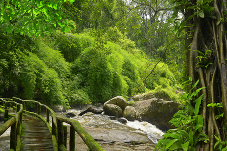 wild asia: River with trees Stock Photo