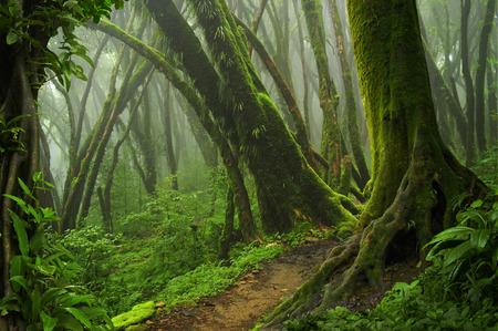 Diepe tropische jungles van Azië in augustus Stockfoto