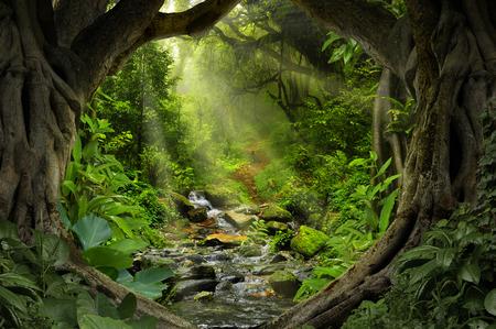 Deep tropical jungles of Asia in august Foto de archivo