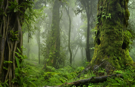 Deep tropical jungles of Asia in august Standard-Bild