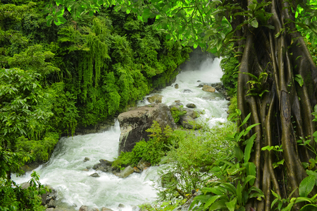 Deep tropical jungles of Asia in august Stock Photo