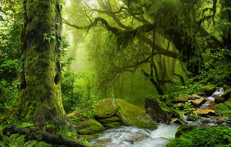 Selva de Nepal con el río Foto de archivo - 74389330