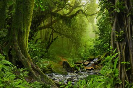 Nepal jungle met rivier