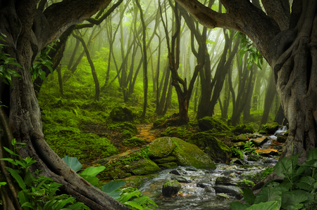 Deep tropical jungles of Southeast Asia in august Banque d'images