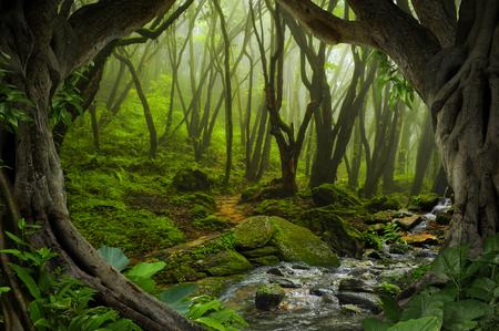 Selvas tropicales profundas del sudeste de Asia en agosto Foto de archivo - 74957370