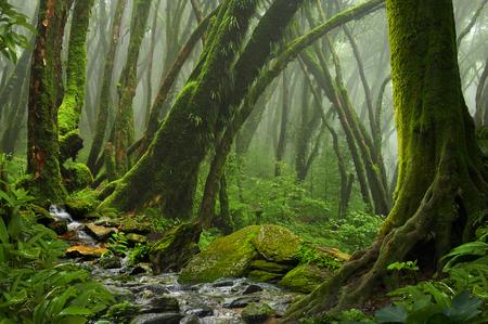 Jungla tropical Foto de archivo - 82919243
