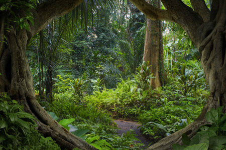 アジア ジャングル