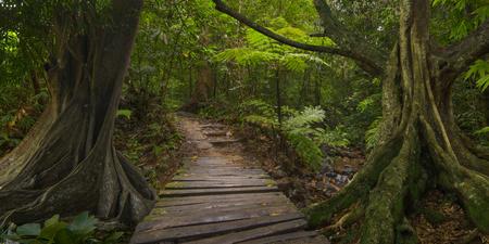 Landscape view of a jungle