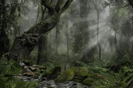 어둠의 숲