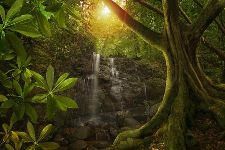 Asian tropical jungle Stock Photo