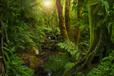 アジアの熱帯ジャングル