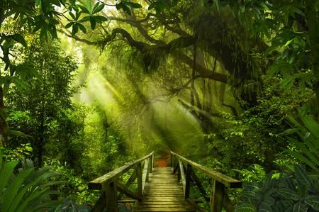 asiatique tropicale forêt tropicale