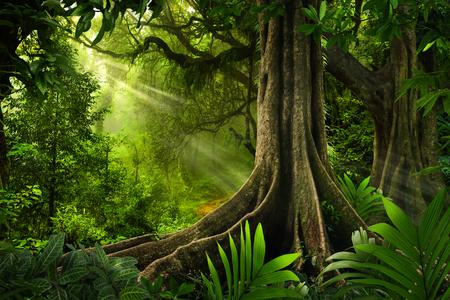 Azjatycki las tropikalny
