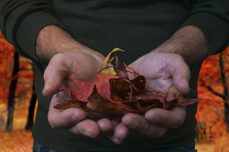 Hands with dry leaves Stock Photo
