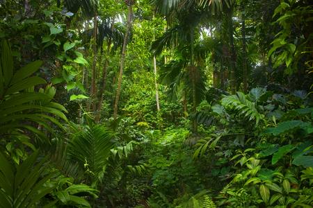 Foresta pluviale tropicale asiatica Archivio Fotografico