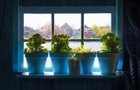 Blue flower pots in the window