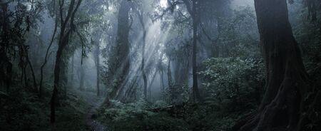 Deep tropical jungle in darkness Foto de archivo - 126253091