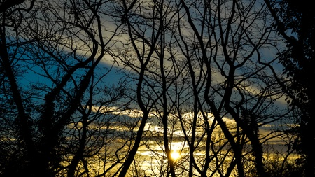 silhouetted: silhouetted trees Stock Photo