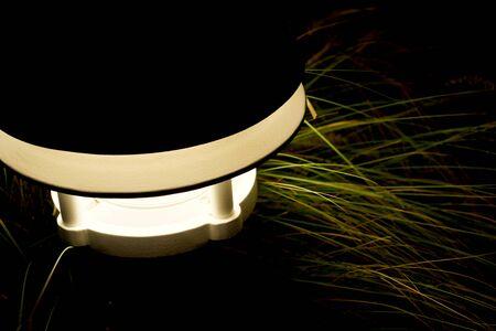 Lamp and Plant at Night 3 版權商用圖片