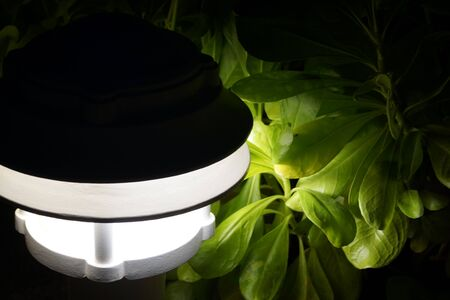 Lamp and plant at night
