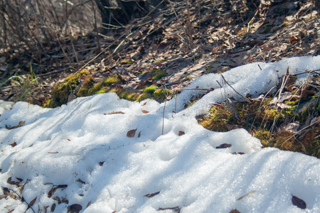 Melting snow with green moss and last year leaves at sunlight Stock Photo