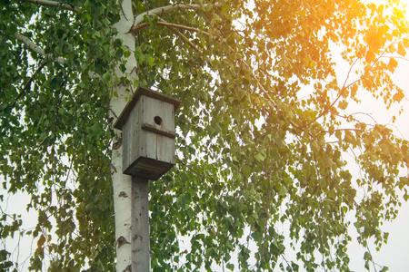 An old hand-made bird feeder on a birch tree