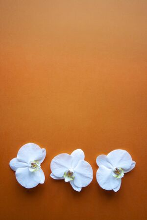 Three orchid flowers on beauty orange background top view. Backdrop with place for text, sale, design, women day, holiday, spa, cosmetics. Vertical