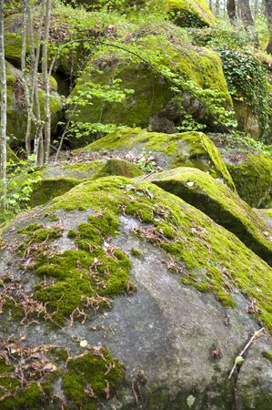 big rocks with moss on forest next to arenas village in spain photo