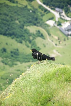 picos: Picos de Europa mountains in Fuente De village Cantabria Spain