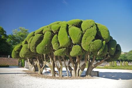 detail of El Retiro public park at Madrid Spain photo