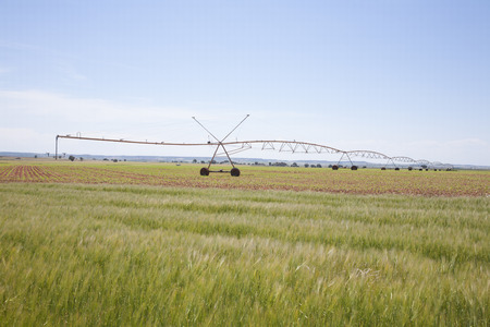 irrigate: wheat green field landscape with irrigate wheels in Castilla Spain Stock Photo
