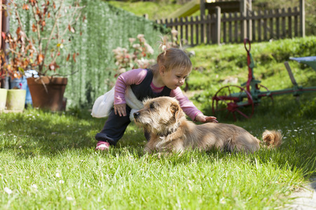family garden: blonde baby two years old age approaching crouching and touching a brown terrier breed dog lying on green grass lawn