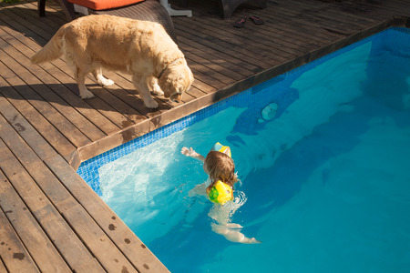 big Golden Retriever dog looking at three years old blonde child with yellow floater sleeves in arms in blue water of swimming pool