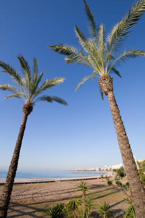 two palm trees framing landscape in Els Terrers Beach, Benicassim, Castellon, Valencia, Spain, Europe. Wooden boardwalk, buildings, blue clear sky and Mediterranean Sea