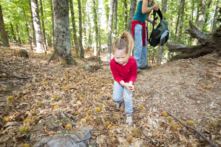 four years age blonde child with red shirt, blue jeans and pigtail, near mother woman with backpack in hand, looking leaves and picking chestnuts in ground in autumn forest Фото со стока