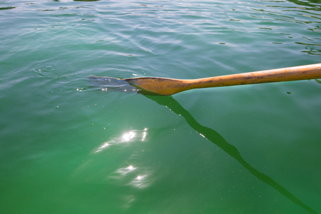 A wooden oar in the green water of a lake rowing