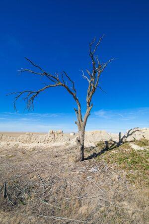 old dead tree, in Ampudia village, Palencia, Castile Leon, Spain, Europe Stock Photo