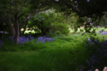 bluebells: Bluebells in a woodland glade, the use of a pinhole camera adds a dream-like air to the scene. Stock Photo