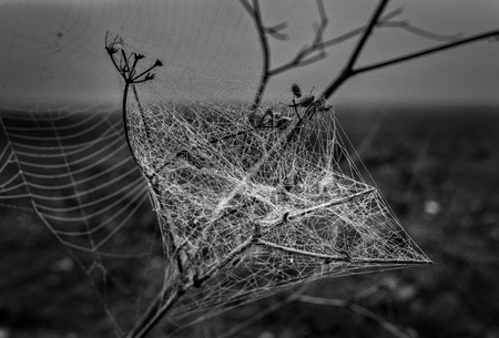 humid: Tangle of cobwebs