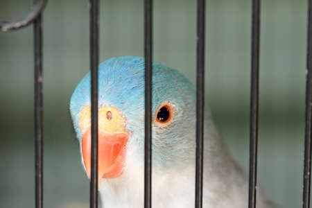 Parrot staring from a cage Stock Photo - 8446942