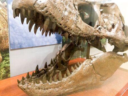 dinosaur head with big teeth on display open wide