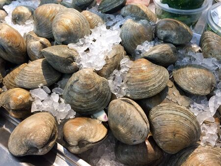 fresh clams shellfish raw whole laid out on white ice at market