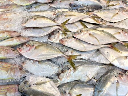 fish big forehead whole laid out on white ice at market