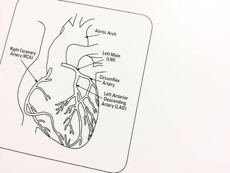 Heart diagram with blank space on white paper backgound