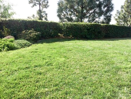 Home yard landscaping lawn grass mowed cut and green trees