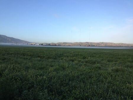 Fertile green rich farmland field by mountain plain crop with morning dew sunrise wet haze fog horizon Фото со стока